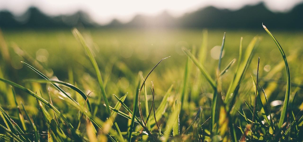 What Beautiful Lawns and Practicing Have in Common
