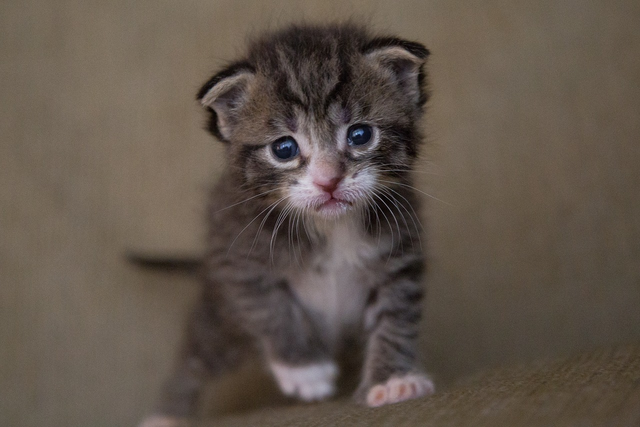 Need a Productivity Boost? Pull up Some Cute Puppy and Kitten Pictures